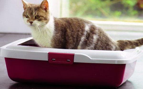 Причины появления крови и слизи в кале у кошки или кота и возможные способы их устранения